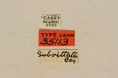 view Anthophilax subvittata Casey, 1891 digital asset number 1