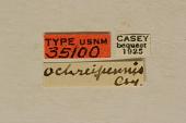 view Ophistomis ochreipennis Casey, 1913 digital asset number 1