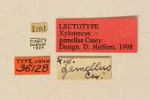 view Xylotrechus gemellus Casey, 1893 digital asset number 1