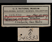 view Cratogeomys castanops excelsus Nelson & Goldman, 1934 digital asset number 1
