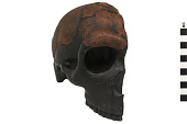 view Saldanha, Fossil Hominid, Human digital asset number 1