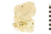 view Orange Elephant Ear Sponge digital asset number 1