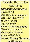 view Spinaxinus emicatus Oliver in Oliver et al., 2013 digital asset number 1