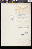 view Eragrostis maxima E. Fourn., nom. illeg. digital asset number 1