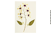 view Orchid digital asset number 1