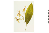 view Bucket Orchid digital asset number 1