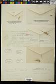 view Heteropogon villosus Nees digital asset number 1