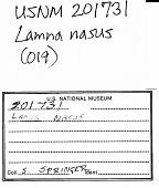 view Lamna ditropis Hubbs & Follett digital asset number 1
