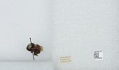 view Bombus (Funebribombus) funebris funebris Smith digital asset number 1