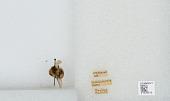 view Bombus (Pyrobombus) sylvicola Kirby digital asset number 1