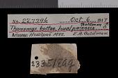 view Thomomys bottae desertorum digital asset number 1