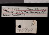 view Thomomys bottae pinalensis Goldman, 1938 digital asset number 1