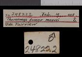 view Thomomys talpoides moorei digital asset number 1