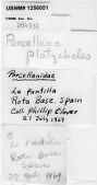 view Porcellana platycheles (Pennant, 1777) digital asset number 1