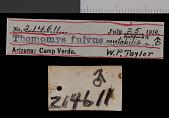 view Thomomys bottae fulvus digital asset number 1