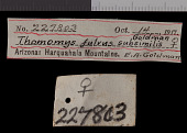 view Thomomys bottae subsimilis digital asset number 1
