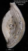 view Spiroloculina profunda Cushman & Todd, 1944 digital asset number 1