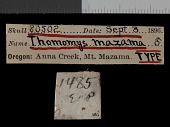 view Thomomys mazama mazama digital asset number 1