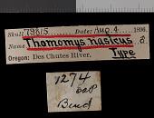 view Thomomys mazama nasicus digital asset number 1