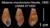 view Hua moutoniana digital asset number 1