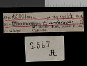view Thomomys talpoides andersoni Goldman, 1939 digital asset number 1