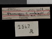 view Thomomys talpoides andersoni Goldman, 1939 digital asset number 1