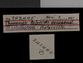 view Thomomys talpoides devexus digital asset number 1