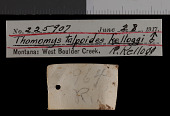 view Thomomys talpoides kelloggi Goldman, 1939 digital asset number 1