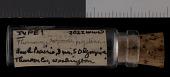 view Thomomys mazama pugetensis digital asset number 1