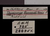 view Thomomys bottae lenis digital asset number 1