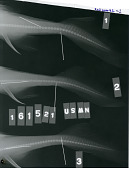 view Centroscyllium ritteri Jordan & Fowler digital asset number 1