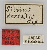 view Silvius (Heterosilvius) dorsalis Coquillett, 1899 digital asset number 1