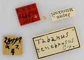 view Tabanus tenebrosus Coquillett, 1899 digital asset number 1
