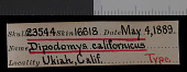 view Dipodomys californicus californicus digital asset number 1