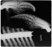 view Tursiops truncatus (Montagu, 1821) digital asset number 1