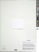 view Selaginella eclipes W.R. Buck digital asset number 1