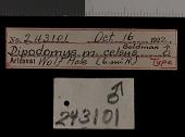 view Dipodomys microps celsus Goldman, 1924 digital asset number 1