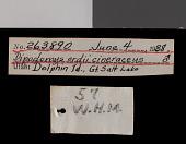 view Dipodomys ordii cineraceus Goldman, 1939 digital asset number 1