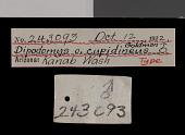 view Dipodomys ordii cupidineus Goldman, 1924 digital asset number 1