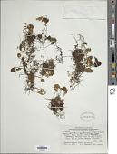 view Hymenophyllum pectinatum Cav. digital asset number 1