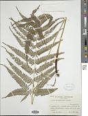 view Pteris kiuschiuensis Hieron. digital asset number 1