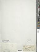 view Oleandra articulata (Sw.) C. Presl digital asset number 1