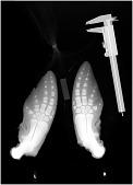 view Phocoena phocoena (Linnaeus, 1758) digital asset number 1