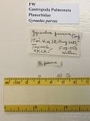 view Gyraulus parvus (Say, 1817) digital asset number 1