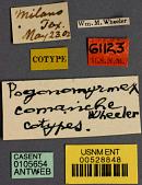 view Pogonomyrmex occidentalis comanche Wheeler, 1902 digital asset number 1