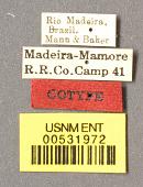 view Dolichoderus (Monacis) debilis var. rufescens Mann, 1912 digital asset number 1