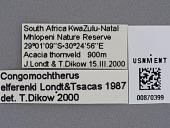 view Congomochtherus elferinki Londt & Tsacas, 1987 digital asset number 1