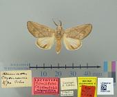 view Hemiceras cayennensis Schaus, 1906 digital asset number 1