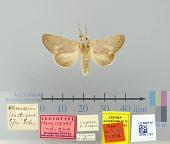 view Hemiceras indigna Schaus, 1906 digital asset number 1
