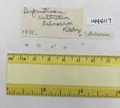view Drepanotrema (Fossulorbis) cultratum labrosum Pilsbry, 1934 digital asset number 1